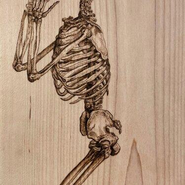Osteographia, XXXVI